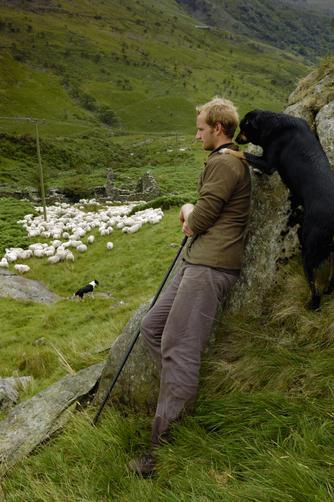 shepherd and sheep. Good Shepherd Sunday
