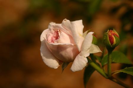 Rose-Garden-img_2958.jpg