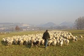 Shepherd and flock.jpg