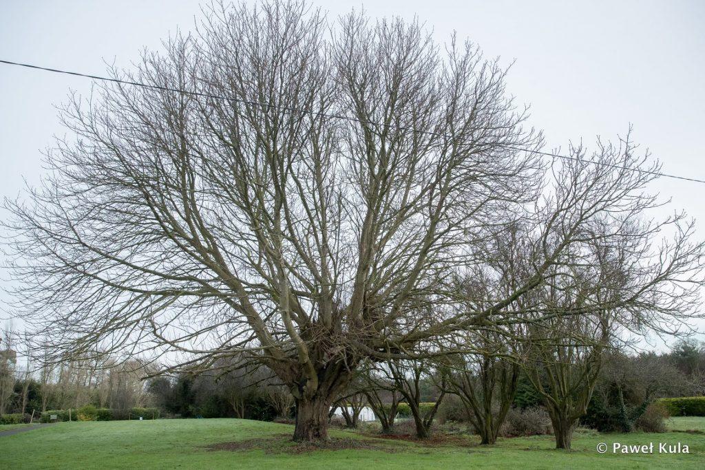[Image: Kula-Tree-2018-1024x683.jpg]